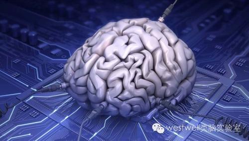 可以应用于包括fpga实现和混合/模拟信号超大规模集成电路,实现类人脑
