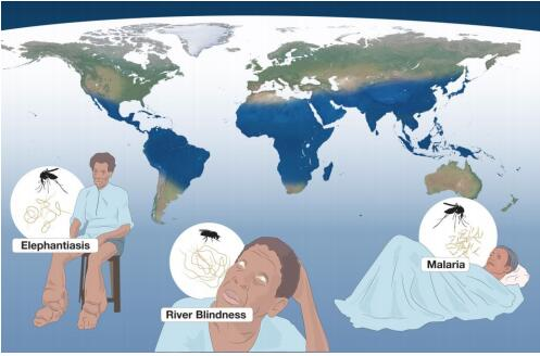 2015年度的诺贝尔生理学或医学奖授予发现了对抗一些世界最严重寄生虫感染病新型疗法的科学家。这些疾病包括盘尾丝虫病、淋巴丝虫病和疟疾。这些疾病的全球分布地区几乎重合,在这张地图上以蓝色表示