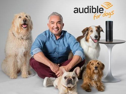 宠物狗也要看书?亚马逊专为你家狗狗推出了有声电子书