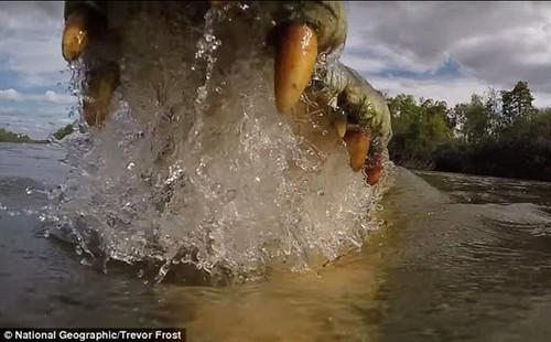 GoPro记录被鳄鱼吃掉的最后画面