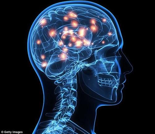 大脑的连接树突